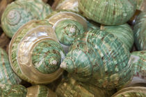 USA, Florida, Apalachicola, Colorful shells in a group. by Danita Delimont