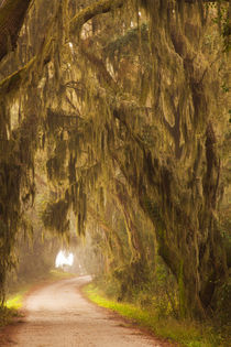 USA, Georgia, Moss draped trees along Laurel Hill Drive in t... by Danita Delimont