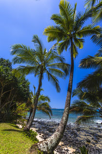 Tropical coastline of Princeville, HI by Danita Delimont
