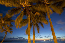 Twilight, Waikiki, Honolulu, Oahu, Hawaii by Danita Delimont