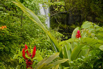Lovely Rainbow Falls in Wailuku State Park on the edge of Hi... by Danita Delimont