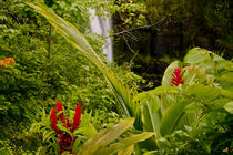 Lovely Rainbow Falls on the Big Island of Hawaii, HI. von Danita Delimont