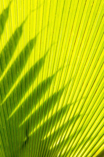 Palm frond in Na `Aina Kai Botanical Gardens and Sculpture P... by Danita Delimont