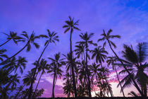 Palm trees at sunset, Pu'uhonua O Honaunau National Historic... by Danita Delimont