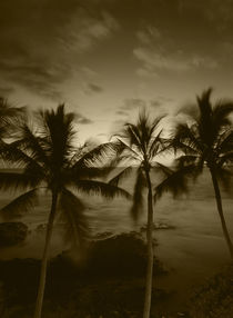 USA, Hawaii Islands, Big Islands, Kona, View palm trees on beach von Danita Delimont