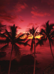 USA, Hawaii Islands, Big Islands, Kona, View palm trees on beach by Danita Delimont