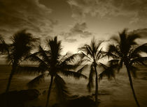USA, Hawaii Islands, Kona, View of palm trees on beach at big island von Danita Delimont