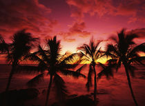 USA, Hawaii Islands, Kona, View of palm trees on beach at big island by Danita Delimont