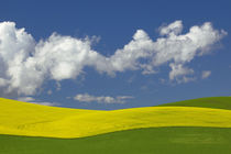 USA, Idaho, Idaho County, Canola and wheat fields by Danita Delimont