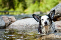 Happy Dog in Hot Springs, Jerry Johnson Hot Springs, Idaho von Danita Delimont