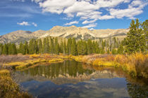 Reflection, Big Wood River, autumn, Sawtooth National Forest... von Danita Delimont