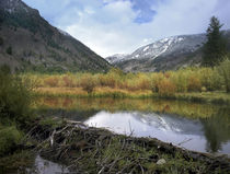 Boulder Mountains and Trail Creek beaver pond with dam in au... von Danita Delimont