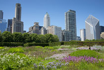Lurie Garden in Millennium Park, Chicago, with Michigan Avenue skyline by Danita Delimont