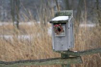 Bird, nest box with holiday wreath in winter, Marion, Illinois, USA. von Danita Delimont