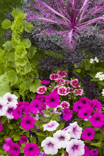 Container with petunias, dianthus, and lobelia, Cantigny Par... by Danita Delimont