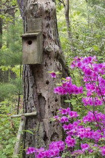 Birdhouse and azaleas, Azalea Path Arboretum & Botanical Gar... by Danita Delimont