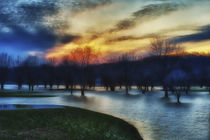 Trees in water on flooded golf course, Lafayette, Indiana von Danita Delimont