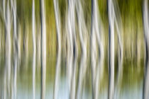 Artistic abstract of trees and reflections in water, Celery ... by Danita Delimont