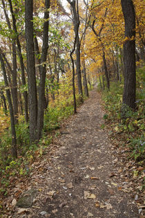 Iowa, Effigy Mounds National Monument, trail to Great Bear a... by Danita Delimont