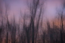 Artistic abstract of trees at sunset above the Upper Mississ... by Danita Delimont