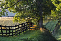 Farm fence at sunrise, Oldham County, Kentucky von Danita Delimont