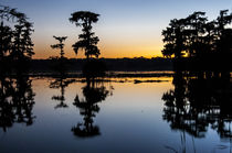 USA, Louisiana, Lake Martin, Rookery Rd von Danita Delimont