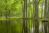 USA, Louisiana, Miller's Lake von Danita Delimont
