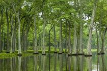 USA, Louisiana, Miller's Lake by Danita Delimont