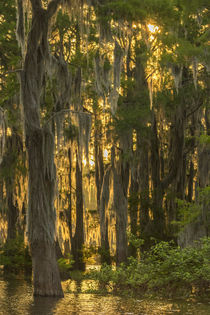 USA, Louisiana, Atchafalaya Basin by Danita Delimont