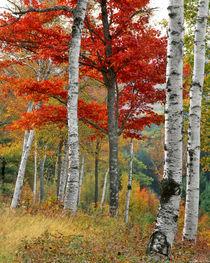 USA, Maine, Wyman Lake by Danita Delimont