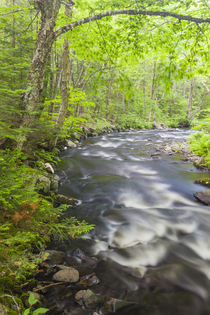 Cold Stream in Maine's Northern Forest by Danita Delimont