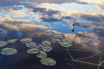 Water lilies and cloud reflections on Lang Pond in Maine's N... by Danita Delimont