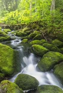 Perham Stream on Lone Mountain near the Appalachian Trail in... by Danita Delimont