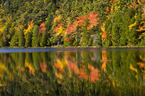 Autumn reflections, Bubble Pond, Acadia National Park, Maine, USA by Danita Delimont