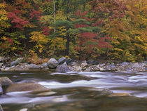Wild River, White Mountains National Forest, Maine von Danita Delimont