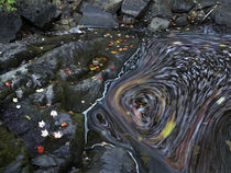 Contrast of movement and stillness as a stream swirls on Duc... by Danita Delimont