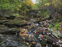 Autumn maple leaves on Duck Brook, Acadia National Park, Maine von Danita Delimont