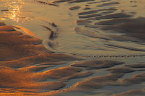 Patterns in the sand at Coast Guard Beach in the Cape Cod Na... by Danita Delimont
