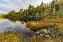 Irwin Lake and bog, Hiawatha National Forest, Upper Peninsul... von Danita Delimont