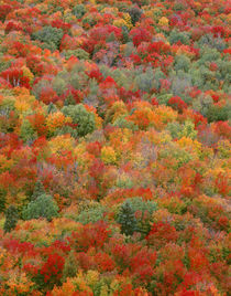 USA, Minnesota, Superior National Forest, Autumn adds color ... von Danita Delimont