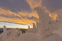 Snow ghosts in the Whitefish Range near Whitefish, Montana, USA. by Danita Delimont