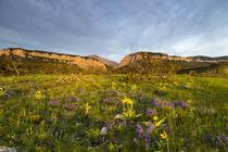 Blackleaf Canyon von Danita Delimont