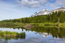 Marias Beaver Pond by Danita Delimont