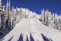 Nice turn tracks off of Lodi on blue sky day at Whitefish, M... by Danita Delimont