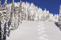 Nice turn tracks off of Lodi on blue sky day at Whitefish, M... von Danita Delimont