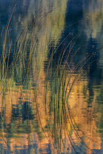 Reed Reflection by Danita Delimont