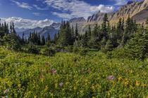 Alpine wildflowers with Garden Wall at Logan Pass in Glacier... von Danita Delimont