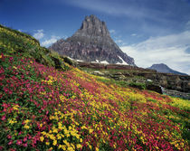 USA, Montana, Glacier National Park, Wildflowers and a mountain peak. by Danita Delimont