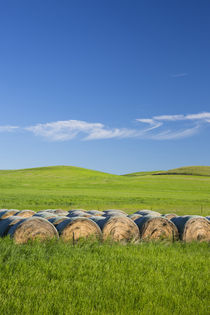 USA, Montana, Fergus County, Hay bales. by Danita Delimont