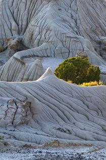 Usa, Montana von Danita Delimont